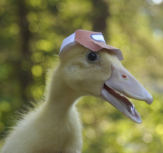 Growing With Plants Ducks With Trucker Hats Playful