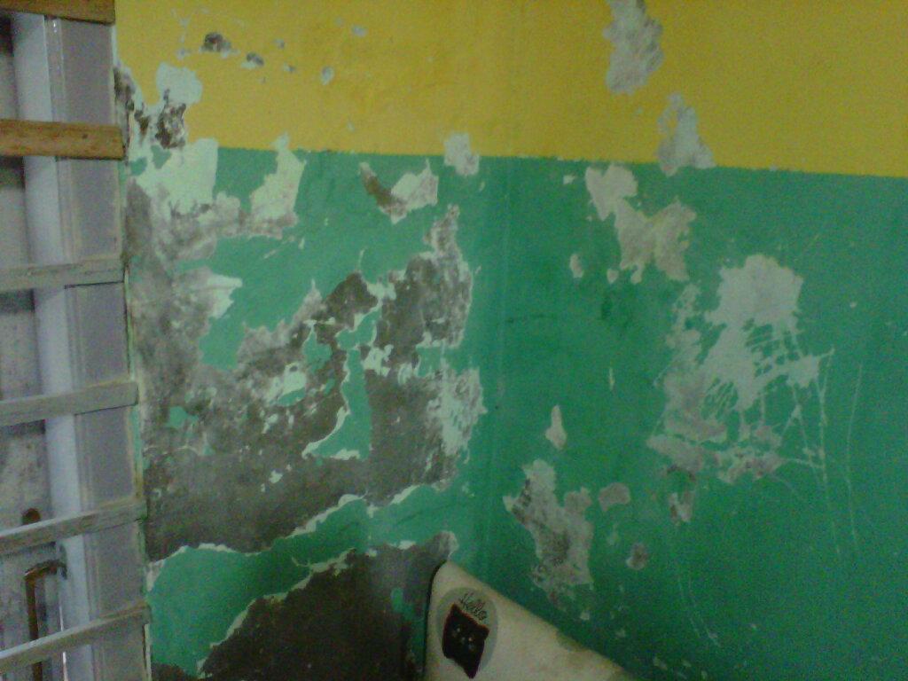 107 Cara Pemasangan Wallpaper Untuk Dinding Rumah