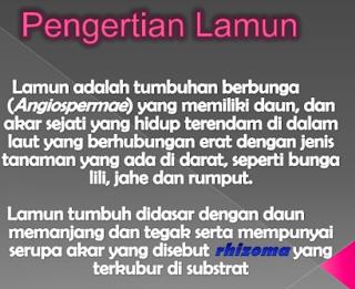 Fungsi Padang Lamun