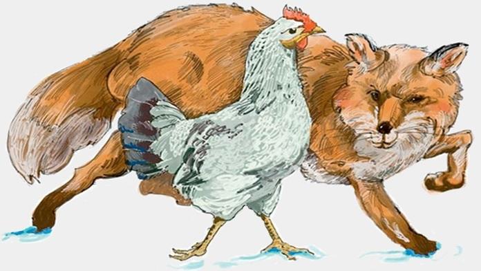 Un gallo molto stupido - anonimo