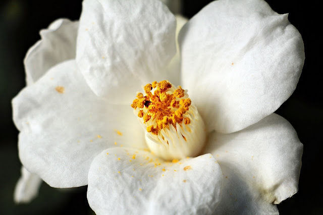 Secret de beauté : le pollen en cosmétique - Blog beauté Les Mousquetettes