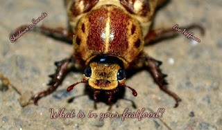 What is in your fastfood? What? Bugs can be a common ingredient...wow