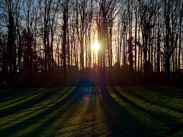Die Sonne scheint durch einige Bäume