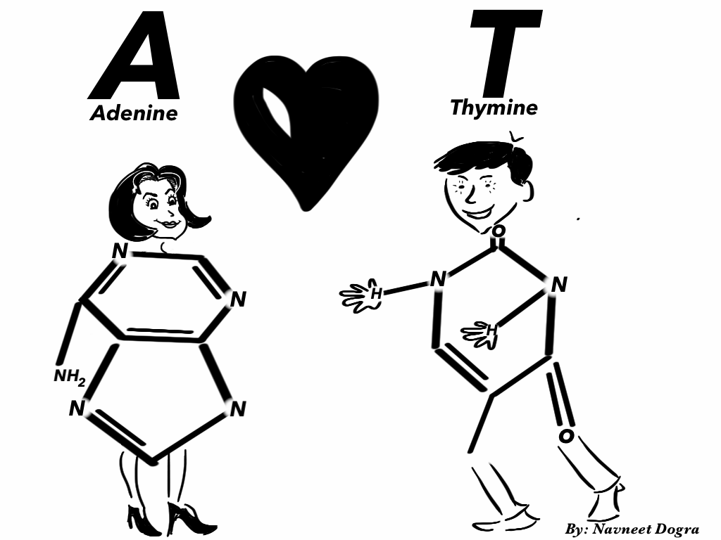 Navneet Dogra Sharing knowledge: DNA Cartoon: Molecule of