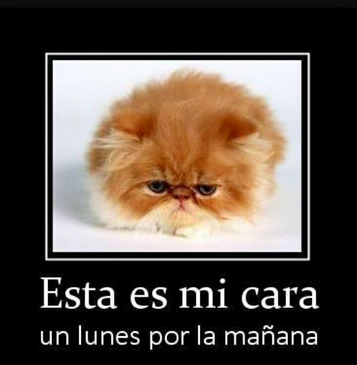 Frases del lunes chistosas
