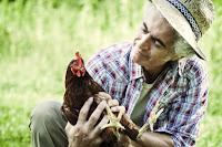 Comment transporter une poule ?