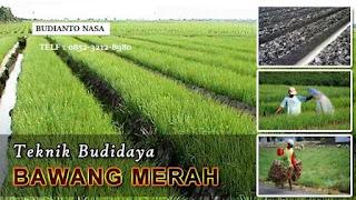 AGEN NASA DI Jorlang Hataran, Simalungun - TELF 082334020868