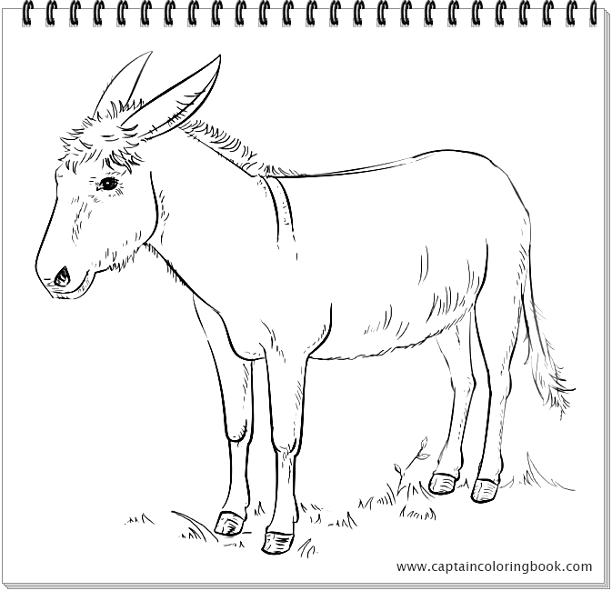 Cute Donkey coloring page | Free Printable Coloring Pages | 650x673