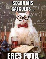 "Gato profesor""Según mis calculos eres puta"""