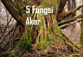 5 Fungsi akar pada Tumbuhan