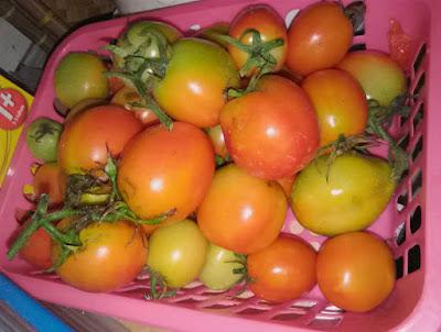 Faktor penting pertanian hidroponik