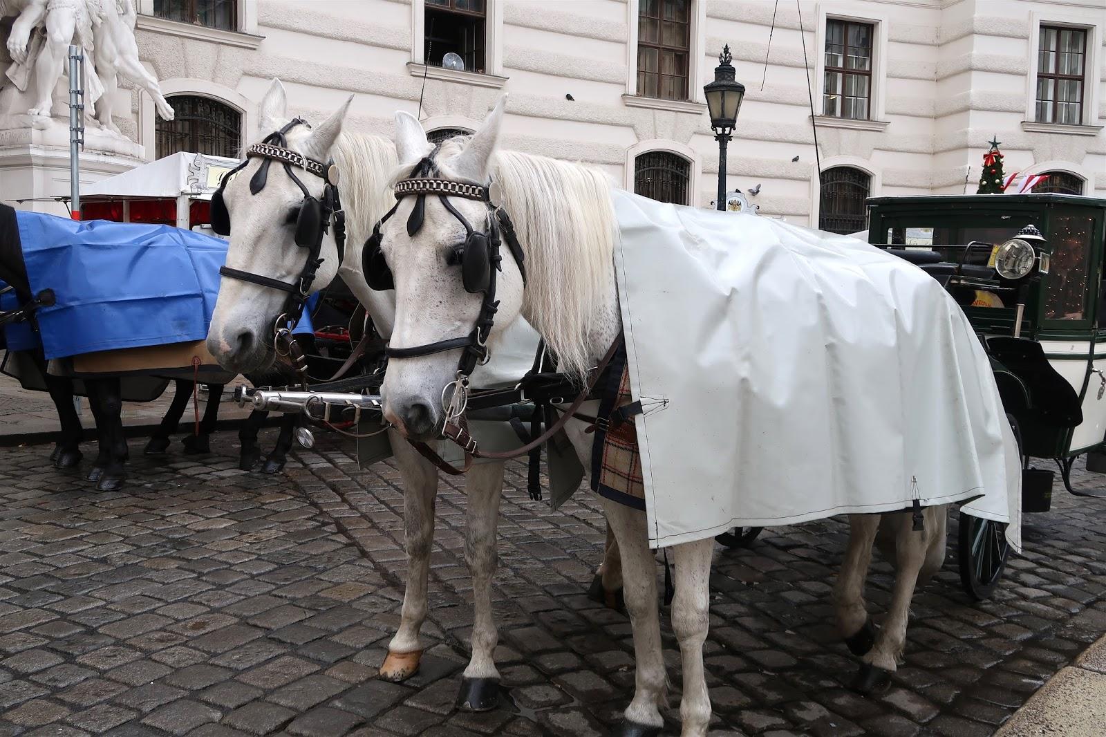 horses outside of riding school