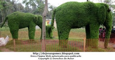 Foto de elefantes de perfil en Animárboles (Arte topiario) por Jesus Gómez