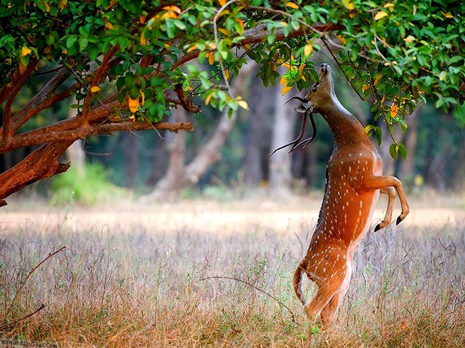 Top 14 Beautiful Deer Wallpapers In HD | OSO wilangon