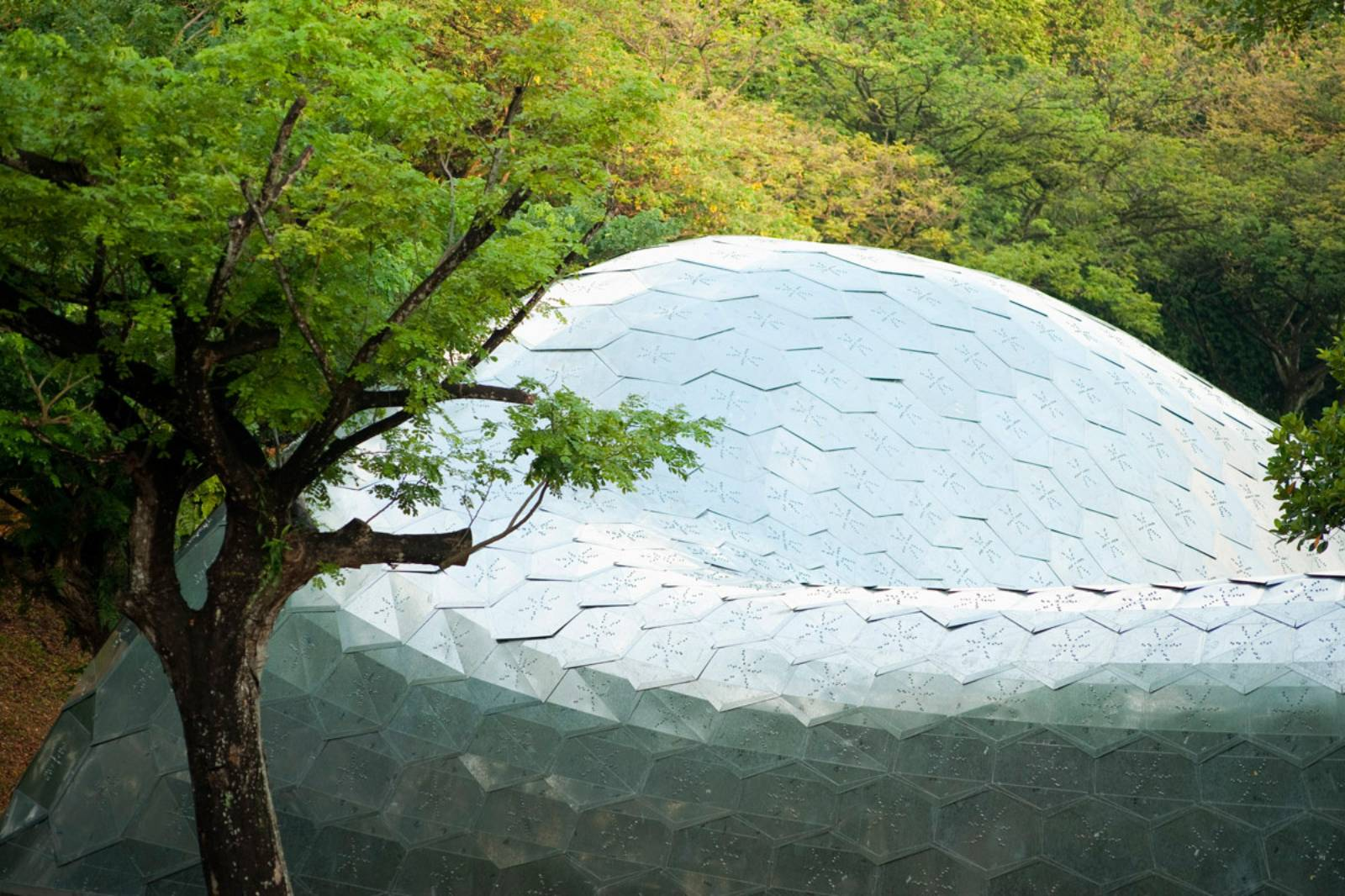 Sutd Library Gridshell Pavilion By City Form Lab