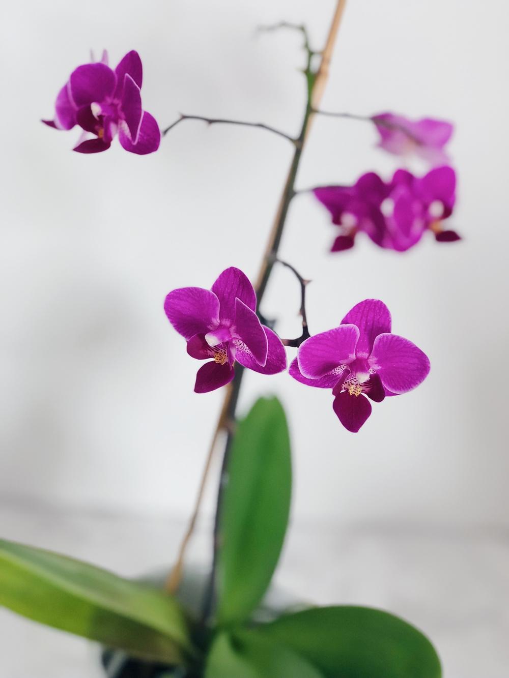 Großartig Orchideen Im Schlafzimmer Fotos >> Warum Sie Pflanzen Im ...