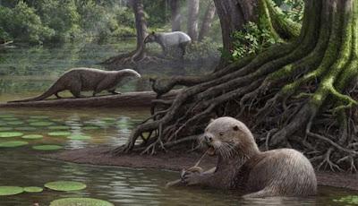 Fosil Berang-berang Raksasa ditemukan di Cina