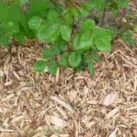 vente de copeaux de bois pour paillage entreprise LEGRET espaces verts élagage