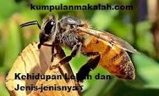 Kehidupan Lebah dan Jenis-jenisnya