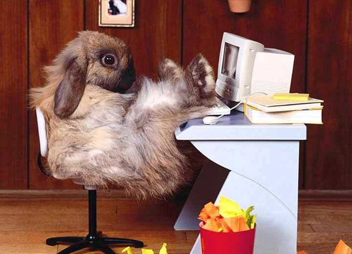 komik tavşan resimleri
