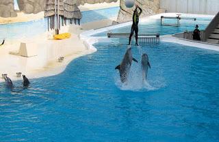 Delfini Riccione