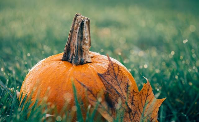creative halloween pumpkin carving decorating ideas DIY
