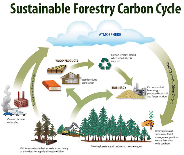 Deforestation And Climate Changes: A Major Impact to the World