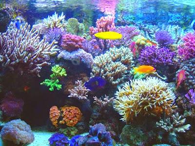 Los corales en serio peligro de extinción