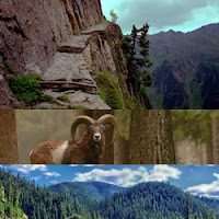 arte de muflão montanhês, precipício e floresta densa da Bulgária