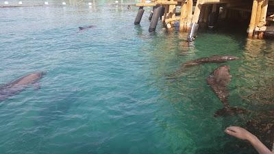 Дельфинарий Эйлат