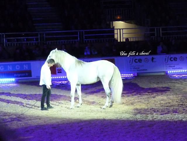 Travail à pied - Spectacle équestre - Equitation - Jean François Pignon