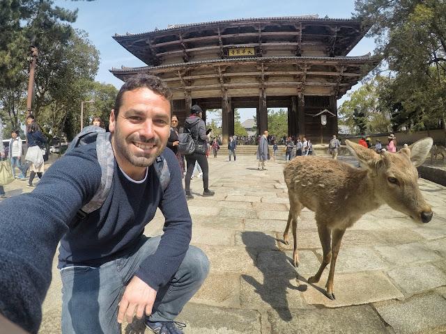 Ciervos de Nara