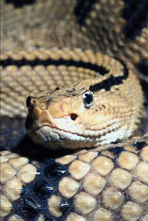 Don't let snakes frighten you out of RV country