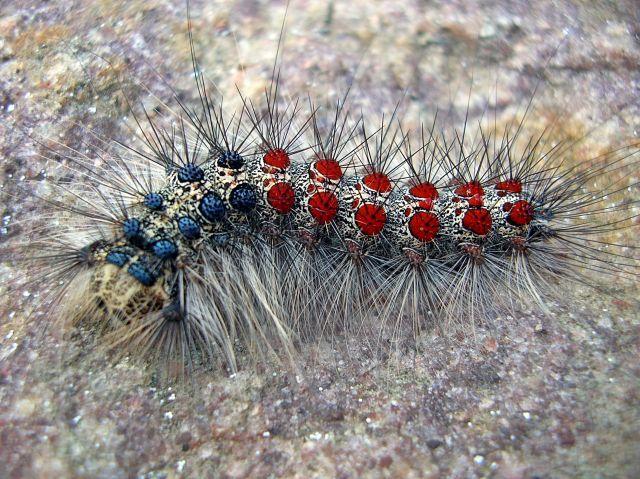 polskie motyle, przyroda