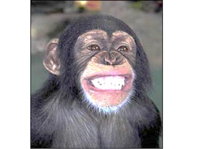chimp showing the fear face smile
