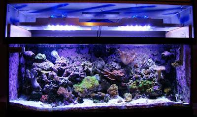 Cara Bikin Lampu Untuk Aquascape Atau Aquarium Warna Biru Dan Putih