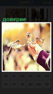 На руке человека устроились несколько птичек, настоящее доверие