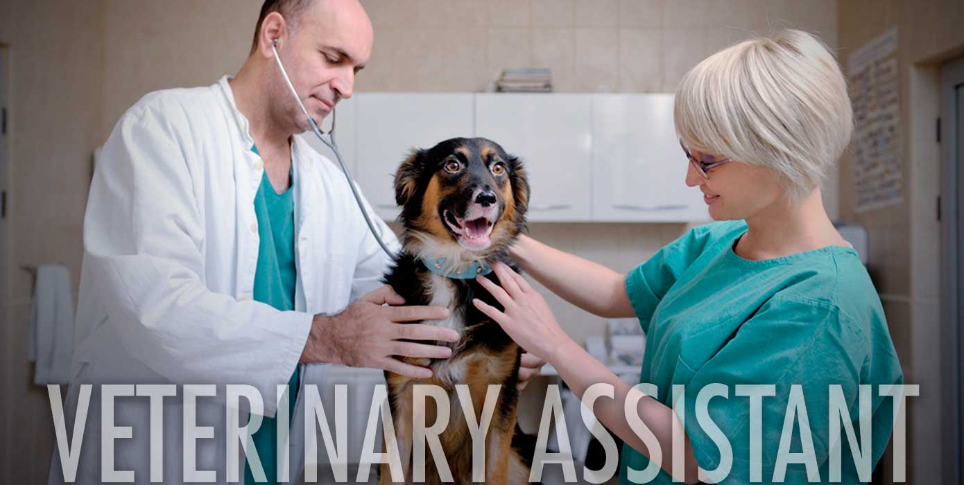 Transient Empathy The Essential Veterinary Assistant