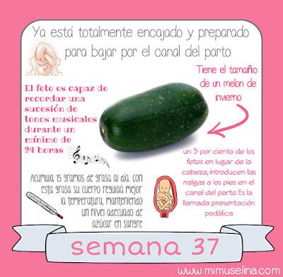 comparar frutas bebé embarazo semana a semana blog mimuselina