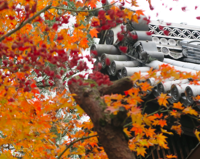 Maruyama-koen Park