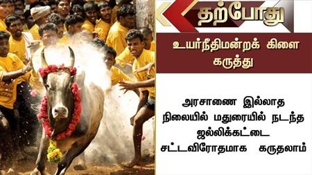 Can consider Madurai Jallikattu as Illegal since there is no Govt Order: HC Branch | #Jallikattu