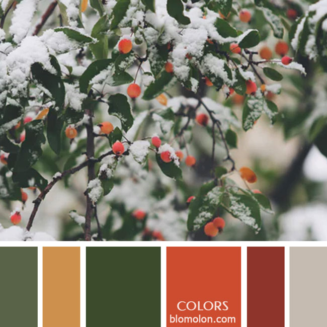 variedad_en_color_paletas_de_colores_51