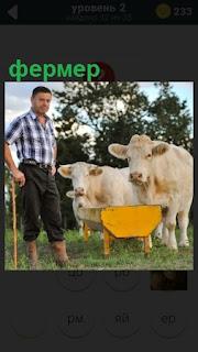 Мужчина фермер кормит своих коров на природе в загоне