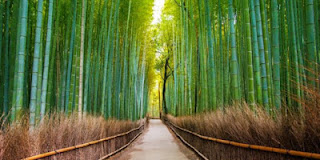 Terowongan bambu Hutan Sagano, Arashiyama, Kyoto