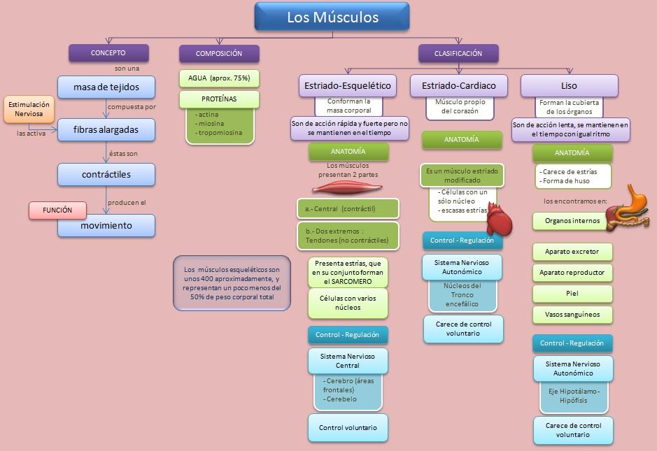 AMIGOS PARA SIEMPRE: MAPAS CONCEPTUALES - ESQUEMAS - DIAGRAMAS ...