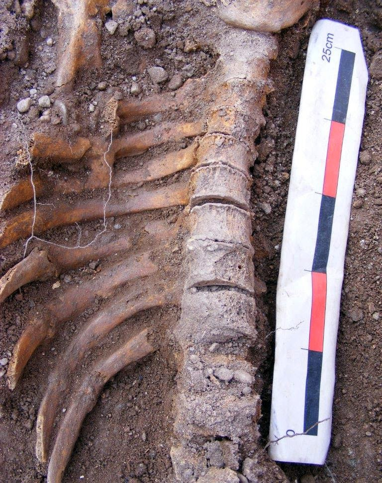 Remains of medieval knight discovered in UK Cathedral