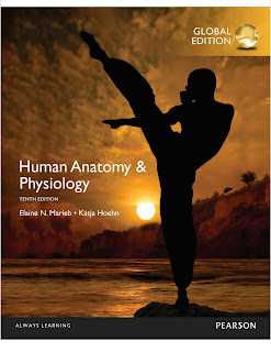 Human Anatomy & Physiology 10th Edition: Global Edition