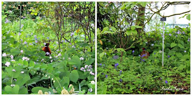 Wisley Garden
