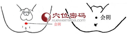 會陰穴位 | 會陰穴痛位置 - 會陰穴位置圖按摩圖解 | Source:xueweitu.iiyun.com