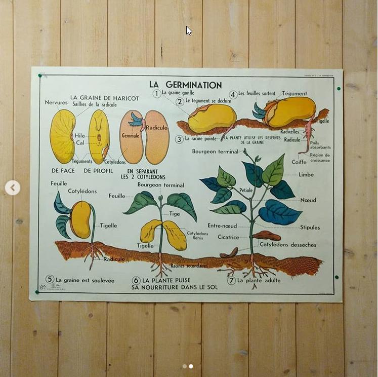 affiche d'école ancienne sur la germination